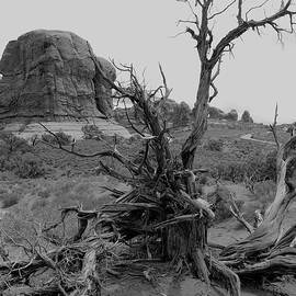 A Dead Tree Sculptured By The Desert by Christiane Schulze Art And Photography