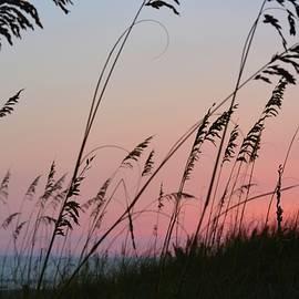Tamra Lockard - A Deep Pink Sunset