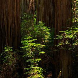 James Eddy - A Deer In The Redwoods