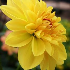 Bruce Bley - A Delight in the Garden