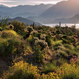 Saija Lehtonen - A Desert Spring Morning