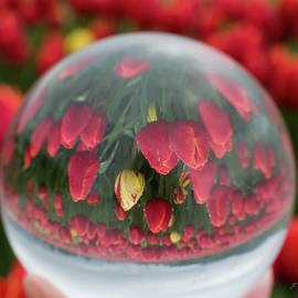 Jordan Blackstone - A Different Perspective - Flower Art