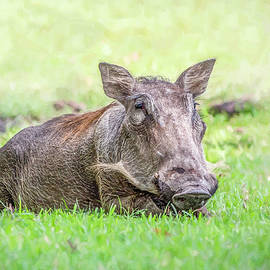 Cindi Alvarado - A Face Only a Mother Could Love- Warthog