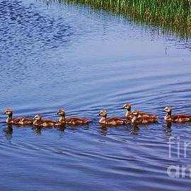 Courtney Dagan - The Geese Family Outing