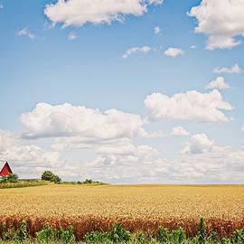 William Sturgell - A Field of Wheat