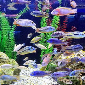 Yali Shi - A Fish Tank with Colorful Tropical Fish