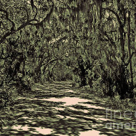 A Florida Canopy by Lydia Holly