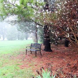 Trina Ansel - A Foggy Spring Morning