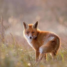 Roeselien Raimond - A Fox Called Pinoccio