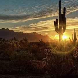 Saija Lehtonen - A Glorious Sonoran Morning