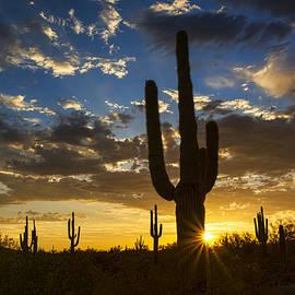 Saija  Lehtonen - A Golden Evening in the Desert