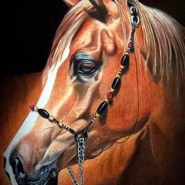 Peggy Osborne - A Horse of Course