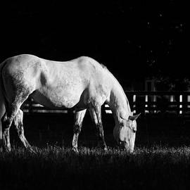 A June Light by Rachel Morrison