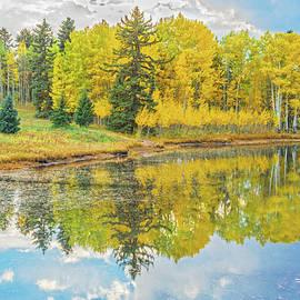 Bijan Pirnia - A Lakeside Willowwacks