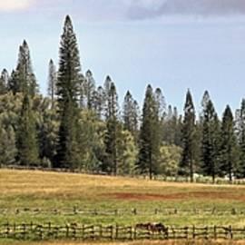 A Lanai Ranch by DJ Florek