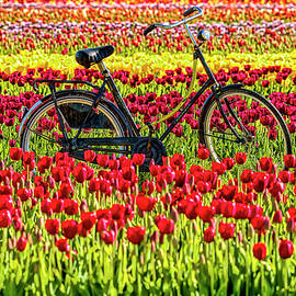 A little slice of Holland  by Geraldine Scull