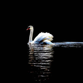 Janet Argenta - A Lone Swan in the Moonlight