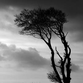 A Lone Tree At Horns Cross by Pete Hemington