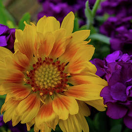 A Medley of Color by Linda Howes