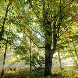 Alana Ranney - A Misty Fall Morning