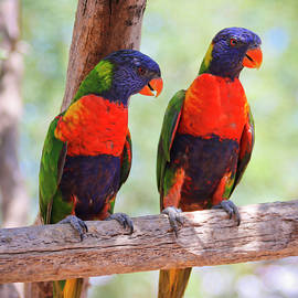 A Pair of Rainbow Lorikeets on a Branch by Derrick Neill