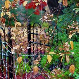 A Paradise Garden by Ira Shander