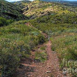 A Path In Bouquest Canyon by Joe Lach