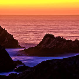 A Pelican Sunset, Point Lobos State Preserve, California by Flying Z Photography by Zayne Diamond