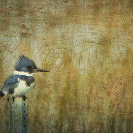 Carla Parris - A Perched Belted Kingfisher