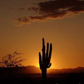 Carol Komassa - A Perfect Arizona Sunset