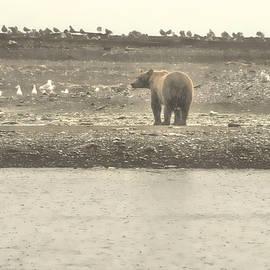 Dyle Warren - A Rainy Day at Hallo Bay