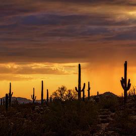 Saija Lehtonen - A Rainy Desert Sunset