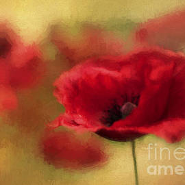 A Red Poppy by Darren Fisher