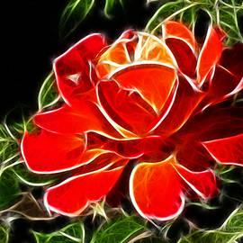 Mariola Bitner - A Red Rose For You