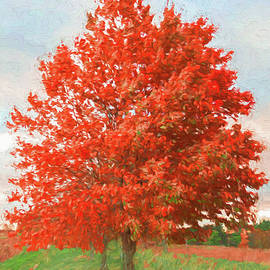 Jeff Oates Photography - A Red Tree