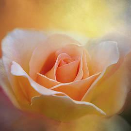 Terry Davis - A Rose for Daybreak