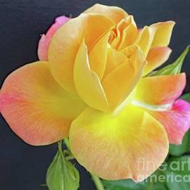 Cindy Treger - A Rose For Mother