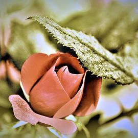 Karen Majkrzak - A Rose in Natural Still Life