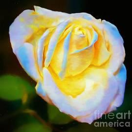 John Kolenberg - A Rose