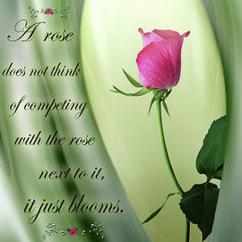 Nina Bradica - A Rose