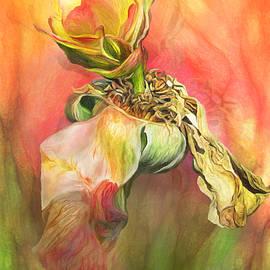 Carol Cavalaris - A Rose Reborn