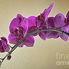 Diana Mary Sharpton - A row of Orchids