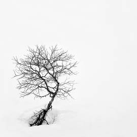 Dave Bowman - A Simple Tree