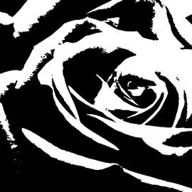 Sandra Foster - A Simply Black And White Rose
