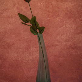 A single red Rose by Stephen Jenkins