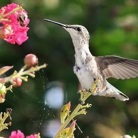 Kim Bemis - A Sip of Nectar