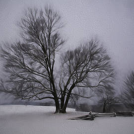Jeff Oates Photography - A Snowy Tree