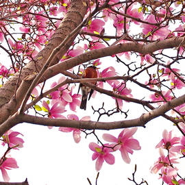 A Songbird in the Magnolia Tree