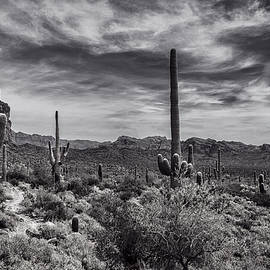 Saija Lehtonen - A Morning Hike in the Superstition in Black and White
