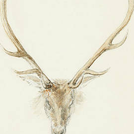 Queen Victoria - A stag shot by John Brown